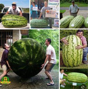2018 Sıcak Nadir Dev Karpuz Tohumları 50 adet Meyve tohumu Sebze Ilginç Bahçe Için Soya Kolay Tatlı Çiftlik Çiftlik Aile Bitki