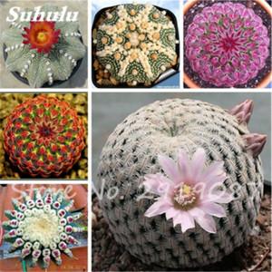 100 Pcs Verdadeiro Sementes De Cactos, Mini Cactus, Prickly Pear, Japonês Suculentas Bonsai Sementes de Flores, Planta Em Vasos Para Casa jardim
