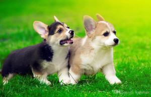 Spedizione gratuita Cute Pembroke Welsh Corgi Puppies Arte di esecuzione Poster Stampa Photopaper 16 24 36 47 pollici