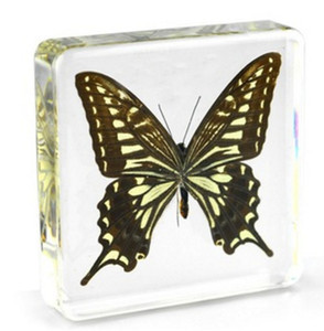Swallowtail Papilio Xuthus Specimen Resin Embedded Paperweight Learning&Education Toys Transparent Mouse New Biology Teaching Science Kits