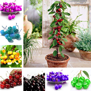 Vendita calda! 20 pz / borsa Semi di Ciliegia, Colore Raro, Semi di Albero Bonsai Ciliegio Nano Seme di Frutta Biologica Casa Giardino Pianta In Vaso