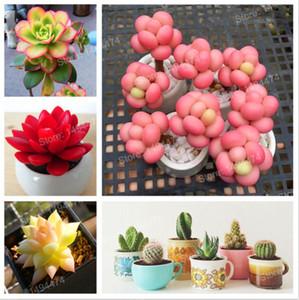 200pcs bag Mix Succulent Plant Seeds Cactus Flower Lithops Pseudotruncatella Office Bonsai plants Seeds for home & garden