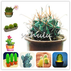 20 Pcs Mini Cactus Seeds, Rare Succulent Perennial Herb Plants,Bonsai Pot Flower Seeds, Indoor Plant Easy Grow In Pots Radiation Protection