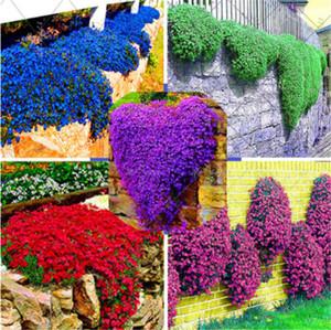 100 pçs / saco Rock Cress Sementes Planta De Cevada De Escalada Perene Bonsai Flor Plantas Sementes Crescimento Natural Decoração Para Casa Jardim