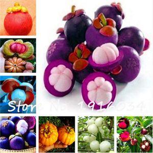30 Pcs bag Mangosteen Fruit Mangosteen Seeds Organic Heirloom Fruit Seeds Tree Seeds Nutrient-Rich Queen Of Tropical Fruits