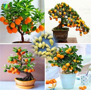 30 Pcs / Sac Bonsai Orange Tree Graines Organique Doux Fruit Fruit Graines Pour Pot De Fleur Planteurs Très Grand Et Délicieux