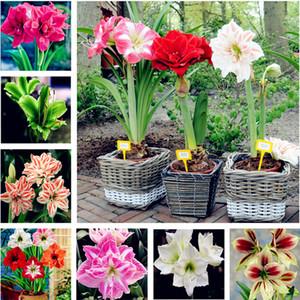 Vendita calda 100 pz semi di Amaryllis, Amaryllis Semi di Fiori, semi di fiori bonsai hippeastrum Barbados Lily pianta per la casa giardino pianta