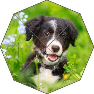 Border Collies Original Personalizado Black Puppy Imagem Auto Guarda-chuva Dobrável