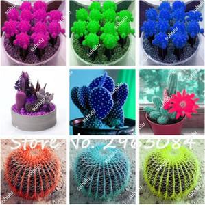 10 Pcs Sementes de Suculentas Cactus Híbrido Bonsai Sementes Diferentes Cactos Espécies, Mixed Cactus Sementes Cactaceae Absorção de Radiação