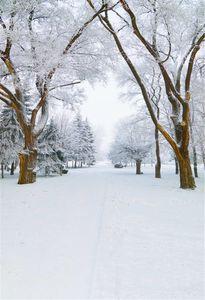 Schöne Winter-Ansicht-Vinyl-Fotografie-Hintergründe druckten weißen Schnee bedeckten Baum-Straßen-Kinder-szenischen Fotoaufnahme-Hintergrund im Freien