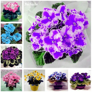 120 Pcs Exotic african violet seeds Mixed colors Flower Seed Saintpaulia Ionantha Garden bonsai Plant pot Perennial Herb seeds