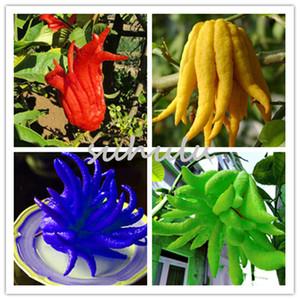 New 100Pcs Bergamot Seeds, Family Potted Plants,Gold Buddha Hand, Purify Air,seeds Yellow Gold Buddha Hand So Rare Garden Plants