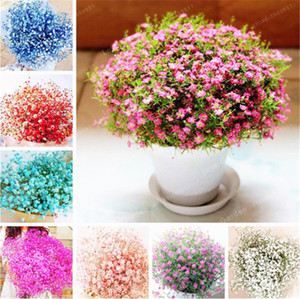 Gypsophila Paniculata Seeds 100 Pcs Mixed Beautiful Bonsai Starry Flowers Easy Growing Multi-Color DIY Garden Ornamental Flowers