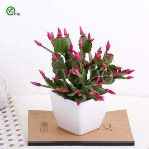 Balcón semillas para macetas China Cactus Semillas Árbol Potted Bonsai Patio Jardín de su casa Bonsai Plant 30 unids T035