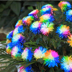 100 Pcs / bag Rainbow Chrysanthemum Flower Seeds Ornemental Bonsai, Rare Color, More Chrysanthemum Seeds Garden Flower Garden Supplies I186