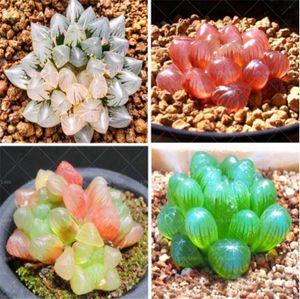 100 pz rare cristalline bellezza succulente semi facile da coltivare in vaso ornamentale per la casa giardino cortile spedizione gratuita