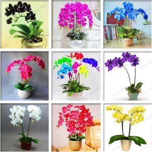 100 adet / torba orkide tohumları, Phalaenopsis orkide çiçek tohumları ev bahçe için çok yıllık balkon bitki bonsai tohumları orkide tencere