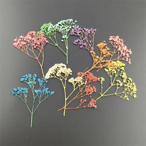 Mini pressé séchée fleur de gypsophile pour la fête de mariage maison pendentif collier artisanat bricolage à la main bougies fleurs Bouquet accessoires