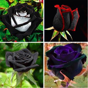 100pcs / sac Black Rose Seeds avec bord rouge, couleur rare jardin populaire fleur graines vivaces Bush ou Bonsai Fleur pour la maison garde