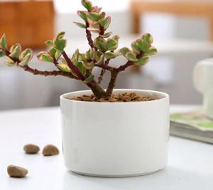 Seramik bonsai tencere toptan mini beyaz porselen saksılar etli succulent kapalı ev için Fidanlık yetiştiricilerinin tedarikçiler