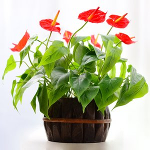 Indigo Anthurium Bouquet 18 Foglie 3 Flower Latex Anthurium Root Calla Real Touch Fiori da sposa All'ingrosso all'aperto