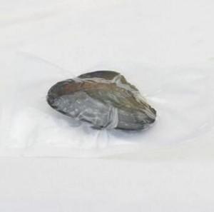 6-7.5mm Akoya Pearl Natural Pearl Oyster con gotitas de agua Perlas sueltas para joyería de bricolaje Hacer envases al vacío al por mayor