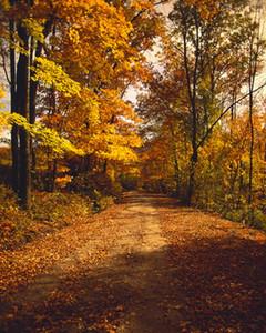 Beautiful Scenery fondali fotografia Autumn Forest coperto con foglie d'oro Sfondi per tessuto di vinile Photo Studio personalizzato