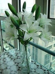 Wholesale-70pcs ghirlande di fiori decorativi di seta fiore / nylon doppio fiore di colore calza fare 50-80cm fai da te accessori di fiori di seta