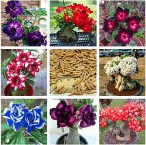 100% True Desert Rose graines adenium obesum graines bonsaï graines de fleur adenium double pétales plante en pot brave coeur 2 pcs / sac