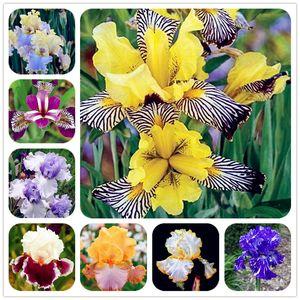 Große förderung! 100 Stücke Iris Samen, Bonsai Blumensamen Heirloom Iris Tectorum mehrjährige Blumensamen Selten Palnt für Hausgarten