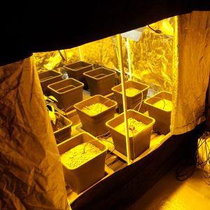 Büyüyen Çadır Yansıtıcı Mylar İç Mekan Çiçekleri için Obeservation Pencere ve Zemin Tepsili Suya dayanıklı tentage