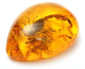KiWarm Fashion Scorpioni naturali Insect Inclusion Amber Baltic Gemstone Pendant Necklace Maglione Decorazioni Artigianato fai da te regalo