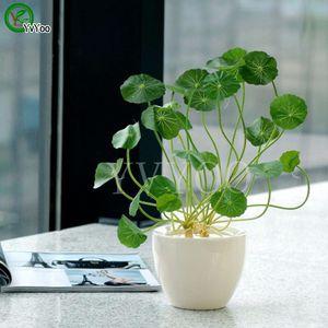 Semillas de Pilea 100 Unids / bolsa Hierba de Cobre Agua Fría Indoor Putdoor Pot Semillas de Plantas Acuáticas Bonsai Ornamentos Anuales de Jardín T017
