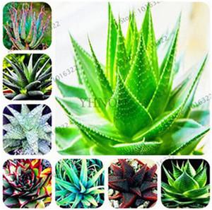 Büyük indirim!!! 100 adet / torba Aloe Tohumları Saksı Süs Şifalı Bitki Etli Tohumları, Bonsai Tohumları Ev Bahçe Saksı Bitki için