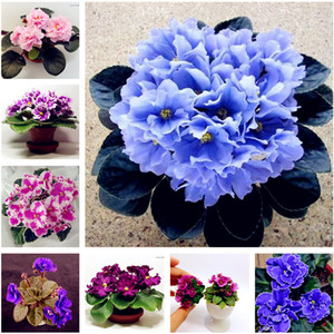 Big Promotion! 100 Pcs African Violet Flower Seeds Rare Garden Bonsai Perennial Herb Flower Seed Variety Complete Mixed 24 Color