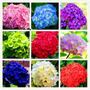 Frete Grátis 20 Unidades / pacote Sementes De Hortênsia Rara Varanda Hortênsia Em Vaso De Flores Para Casa Jardim Plantio Uso Do Casamento