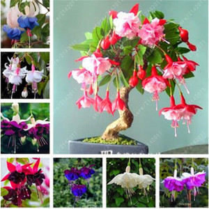 100 шт. / пакет семена фуксии, цветок фуксии, бонсай висит семена цветов, горшечные растения фонарь Бегония семена для домашнего сада