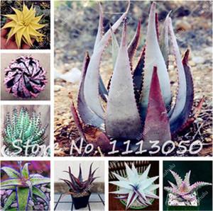100 Adet Succulents Bitkiler Aloe Tohumları, Variety Komple, Kapalı Bitki Bonsai Tohumları, Ofis Masaüstü Çiçekler, Çimlenme Oranı 95%