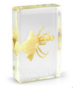 Hermit Crab Specimen Resin Embedded Sea Crab Transparent Mouse Paperweight Block Student Nouveau Populaire Biologie Science LearningÉducation Jouets