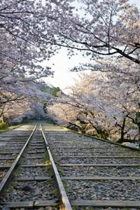 Ferrovia Fotografia Fondali Stampato Pink Cherry Blossom alberi Esterni Sorgente di paesaggio Bambini bambini dello studio Photo Spara Backgrounds
