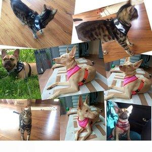 Camouflage Dot Plaid Puppy Dog Harness Mesh collari di cane per Yorkshire Terrier 4 colori 5 formati disponibili.