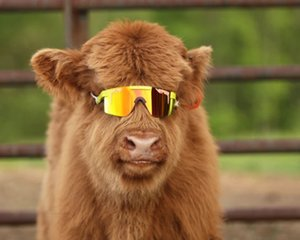 THE 1993 POLARIZED Pit Viper Sport Sunglasses UV Protection: 100% UV pit viper sunglasses