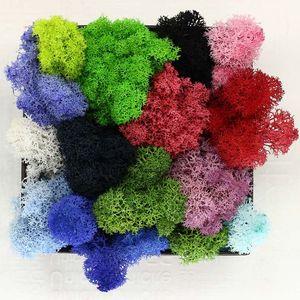 500g DIY Multicolor Moos Blumen Nie Widerrist Floral Materialien Mikroskopische bonsai Für Zuhause Hochzeit Party Decor XD20057