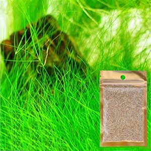 7 espèces d'eau des plantes Semences de l'herbe aquatique l'eau d'aquarium Décor Premier plan réservoir de poissons d'intérieur Embellir Graines de plantes