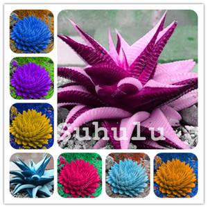 Büyük indirim! 200 Adet Sebze Ve Meyve Bonsai Aloe Vera bitki tohumları Yenilebilir Güzellik Kozmetik Bonsai Herb Sulu Bitki Home For Bahçe