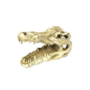 Reptile Vivarium Dekoration Hiding Cave Aquarium Unterwasser-Ornament Krokodil-Schädel