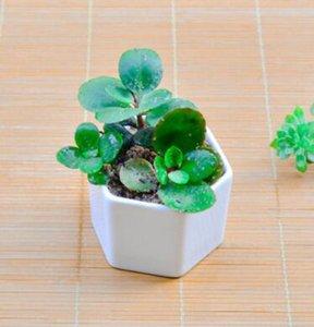 macetas bonsai de cerámica al por mayor de porcelana blanca de mini macetas proveedores para la siembra de los plantadores interior del hogar Nursery suculentas NT