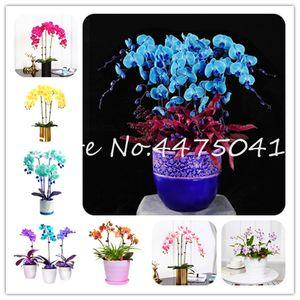 200pcs / Paquet unique coloré Orchidée Phalaenopsis fleur graine de plante Bonsai adorable papillon Orchidée fleur bleu ciel, Flore, Jardin Plante en pot