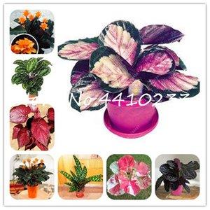 Семена растений 200Pcs Таиланд Caladium Бонсай комнатных растений Многолетние Caladium биколор Цветок завод Бонсай Colocasia Diy Для дома сада