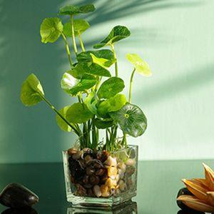 Simülasyon Bonsai Cam Pot 4 Yapraklı Yonca Pencere Dekorasyon Ev Tablo bulunan yakın zamanda Yapay Bitkiler